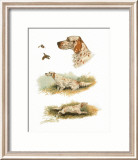 English Setter Posters by Rial 
