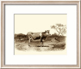 Bovine I Prints by Emile Van Marck
