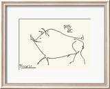Pig Prints by Pablo Picasso