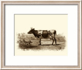 Bovine II Print by Emile Van Marck