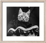 French Tabby Cat Art par Mesh Gabriella