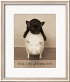 Dog Day Afternoon Prints by Jim Dratfield