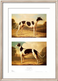 Two Greyhounds Prints by Benjamin Killingbeck