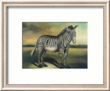 Zebra Prints by Denise Crawford