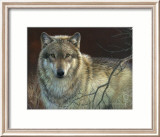 Uninterrupted Stare: Gray Wolf Prints by Joni Johnson-godsy