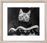 French Tabby Cat Affiches par Mesh Gabriella