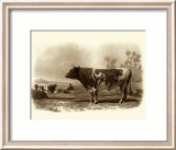 Bovine III Prints by Emile Van Marck