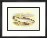 Great Lake Trout Kunstdrucke