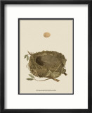 Antique Nest and Egg I Láminas por Reverend Francis O. Morris