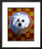 Bichon Art by Robert Mcclintock