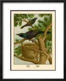 Purple Grackle Posters