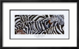 Zebras's Sea Print by LISA BENOUDIZ