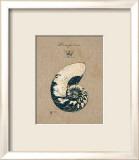 Vintage Linen Nautilus Kunst von  Regina-Andrew Design