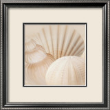 Shells III Prints by Jan Lens