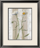 Daisies Prints by Valerie Roy