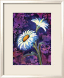 Daisy Lmina gicle enmarcada por Marcella Rose