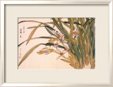 White Orchids Print by Kosikose