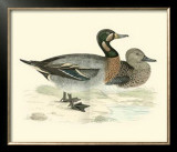 Morris Ducks III Prints by Reverend Francis O. Morris