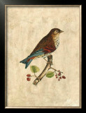 Selby Birds III Prints by Prideaux John Selby