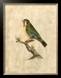 Selby Birds II Posters by Prideaux John Selby