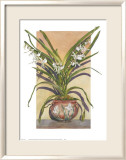 Arts and Crafts Orchids, Angraecum Supurbum Posters by Sally Robertson