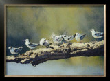 Out on a Limb, White Winged Terns Prints by Dino Paravano
