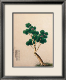 Arbre chinois en fleurs II Affiche