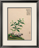 Flowering Chinese Tree III Posters