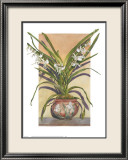 Arts and Crafts Orchids, Angraecum Supurbum Print by Sally Robertson