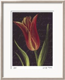 Tulip Limited Edition Framed Print by Jm Designs