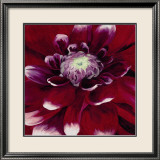 Red Dahlia Print by Beth Winslow