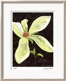Magnolia Limited Edition Framed Print by Jm Designs