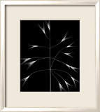 Wild Grasses III Posters by K. Kennedy