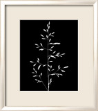 Wild Grasses I Prints by K. Kennedy