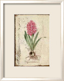 Pink Hyacinth Prints by Lisa Canney Chesaux
