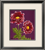 Purple and White Chrysanthemums Posters by Elise Ferguson