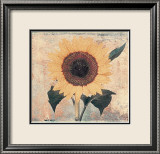 Sunflower Prints by John Faulkner