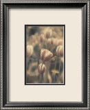 Tinted Tulips I Prints by Thea Schrack
