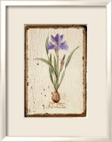 Iris Reticulata Print by Lisa Canney Chesaux