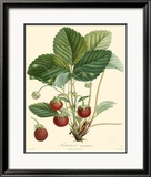 Strawberries Posters by Bessa 
