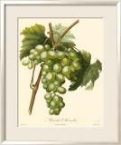 Grapes I Posters by Bessa 