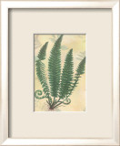 Forest Sword Fern Poster by Walter Robertson