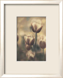 Tinted Tulips III Prints by Thea Schrack