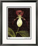 Orchid Limited Edition Framed Print by Jm Designs