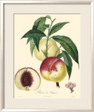 Peaches Print by Bessa 