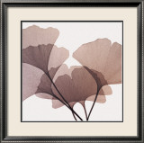 Ginkgo Leaves I Affiches par Steven N. Meyers