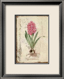 Pink Hyacinth Print by Lisa Canney Chesaux