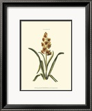 Antique Hyacinth IX Prints by Christoph Jacob Trew
