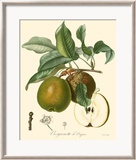 Pears Poster by Bessa 