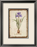 Iris Reticulata Prints by Lisa Canney Chesaux